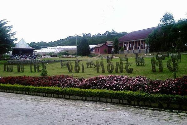 Đồi Mộng Mơ địa điểm du lịch hấp dẫn ở Đà Lạt