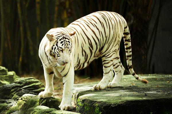 Vườn thú khu du lịch Đại Nam
