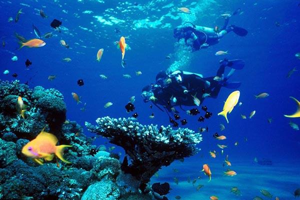 Đảo Hòn Mun địa điểm du lịch Nha Trang tuyệt đẹp