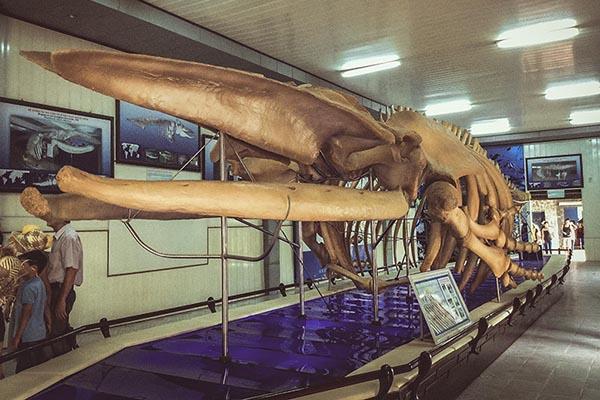 Viện Hải Dương Học nơi trưng bày các mẫu vật sinh vật biển